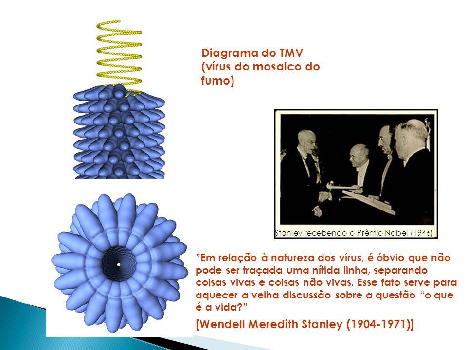 [Wendell Meredith Stanley (1904-1971)]